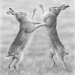 Boxing Hares by Nolon Stacey