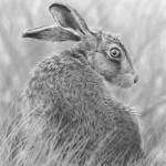 a_hare_on_the-Lookout