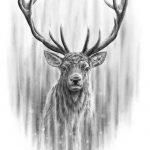 red_deer_stag_2