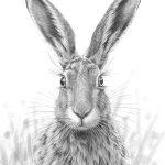 Alert Hare II