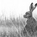 Listening Hare by Nolon Stacey