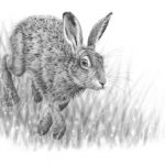 Hare running 3