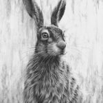 Wide Eyed Hare by Nolon Stacey