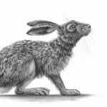 Hare Portrait by Nolon Stacey